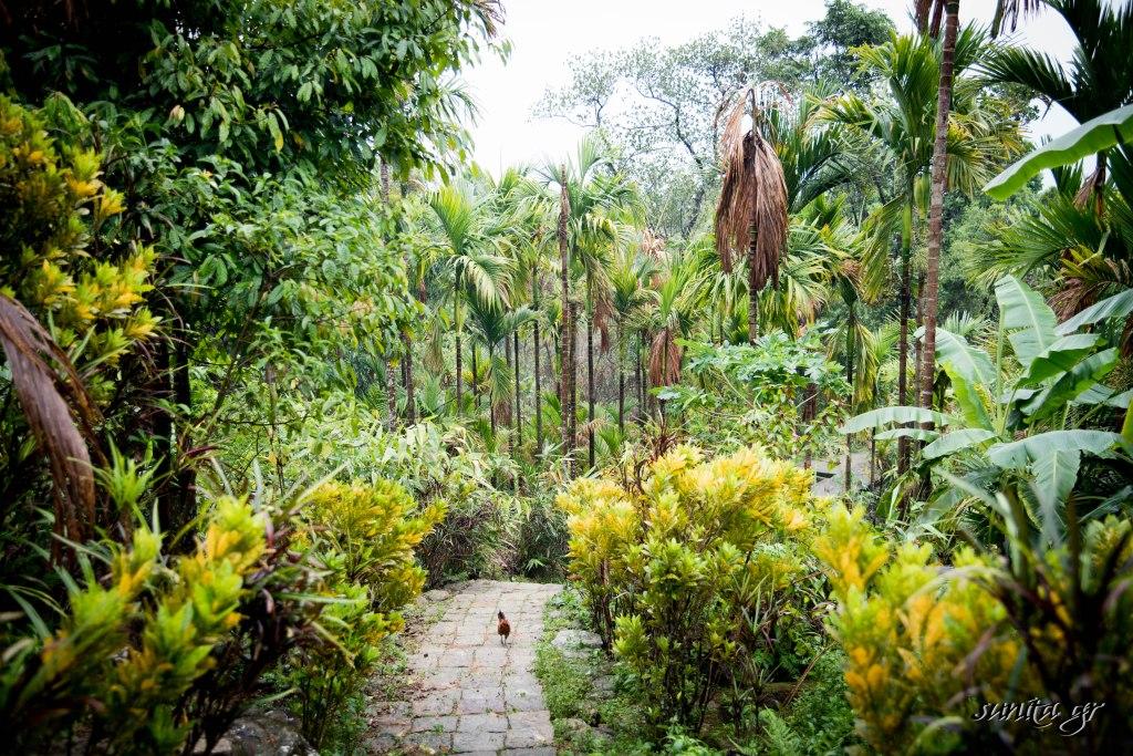 #cleanest village, #community living, #ecofriendly, #india, #living root bridge, #Mawlynnong, #photography, #quaint, #sustainability, #travel, #travel photography, #Meghalaya,