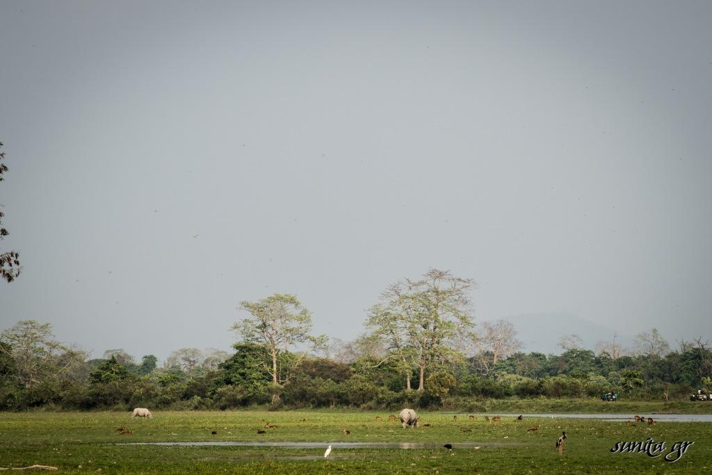 #kaziranga, #onehornedrhino, #indianrhino, #worldheritage, #wildlife, #wildlifesanctuary, #assam, #india, #conservation,
