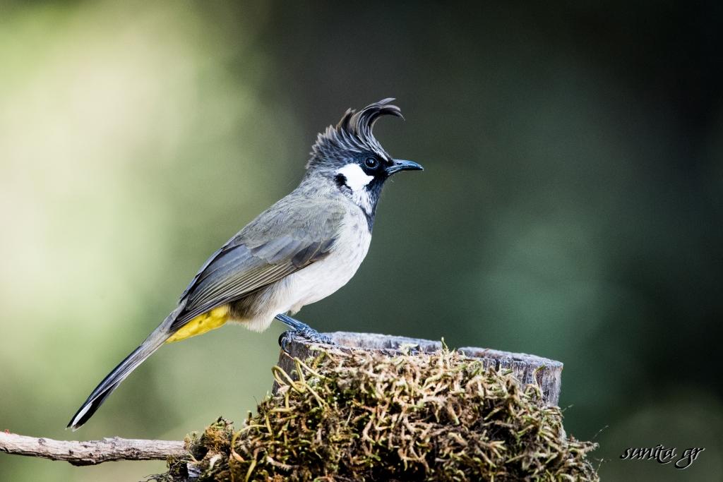 #birdphotography, #birds, #himalayas, #hills, #sattal, #nature, #travel, #india,