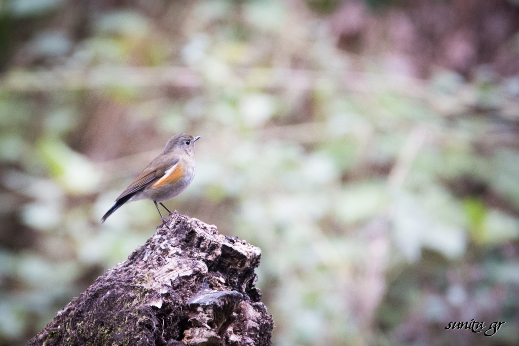 #birdphotography, #birds, #himalayas, #hills, #sattal, #nature, #travel, #india,
