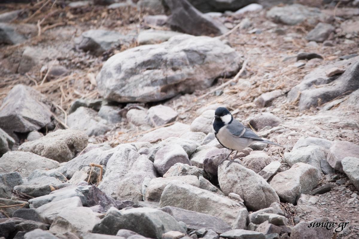 #birds,#bird, #ladakh, #photography, #birding, #travel, #travelphotography, #birdphotography, #rumbak, #snowleopard, #trek, #himalayas,