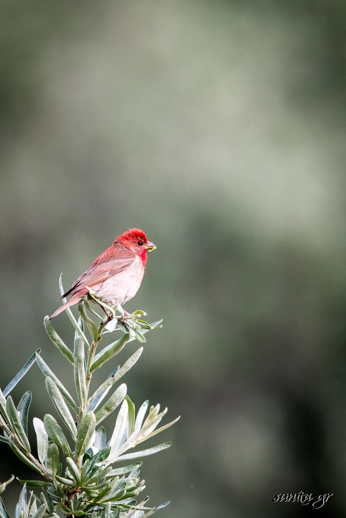 #birds, #bird, #kaza, #photography, #birding, #travel, #travelphotography, #birdphotography, #himalayas, #himachal, #roadtrip, #spitivalley